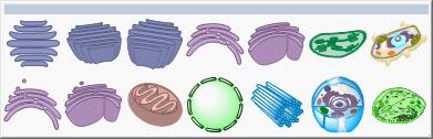 细胞器工具