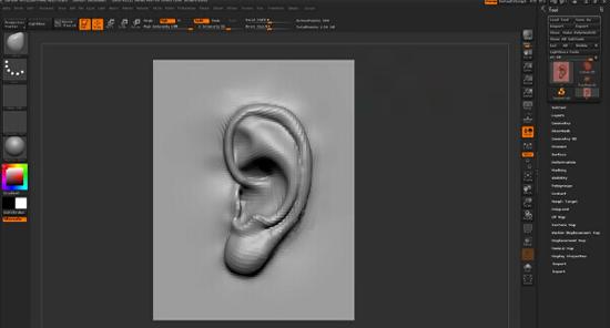 耳朵结构雕刻