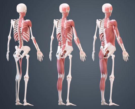从骨骼开始