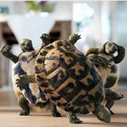 跳舞的海龟