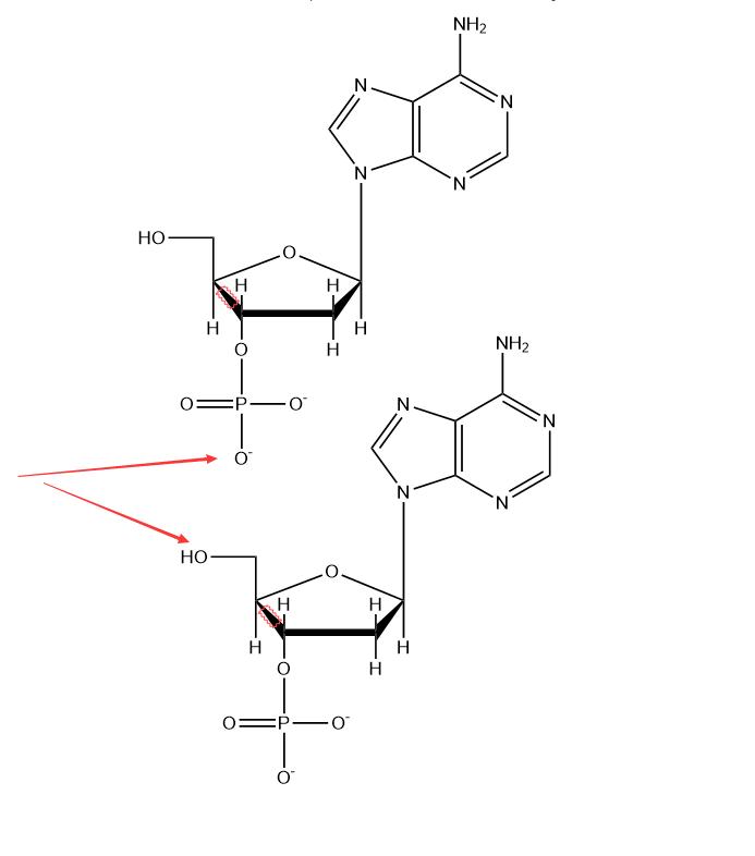 连接磷酸二酯键