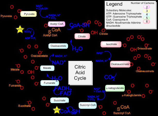 图片形式复制ChemDraw化学式