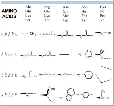 氨基酸侧链工具