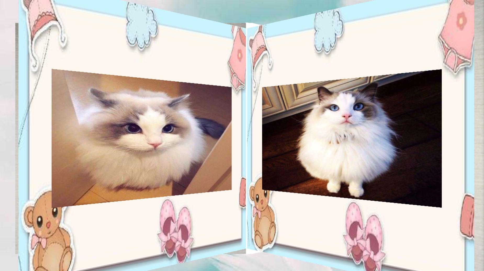 会声会影制作布偶猫的翻页电子相册教程