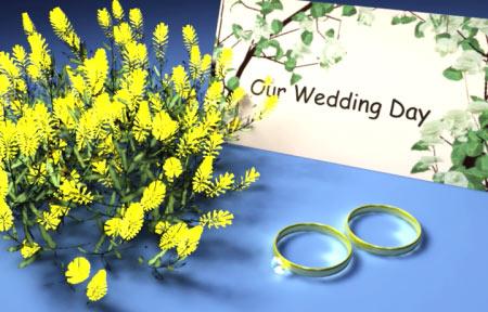 简洁婚礼素材