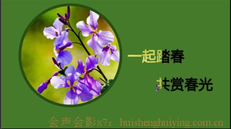 花朵效果2