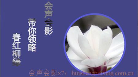 花朵效果3