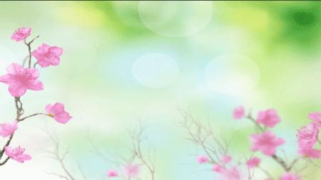 桃花朵朵视频素材