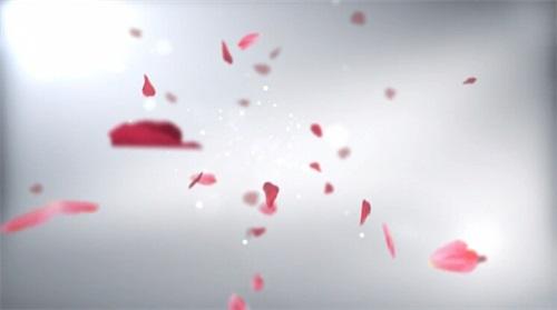 婚礼片头视频素材