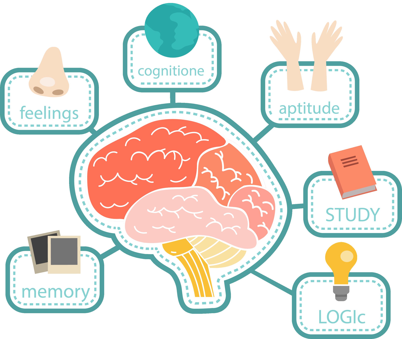 思维导图与词汇关联