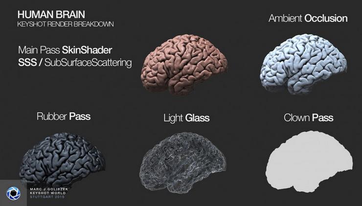 人类大脑渲染分解