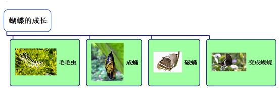 蝴蝶的成长联想