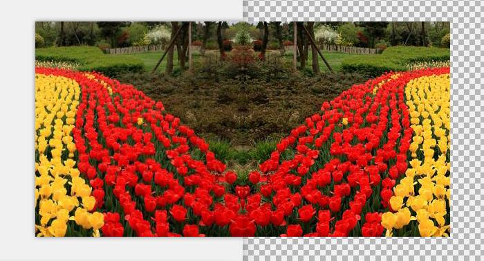 PhotoZoom中的翻转功能,竟然可以给图片做出对称效果!
