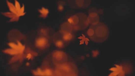 枫叶视频素材