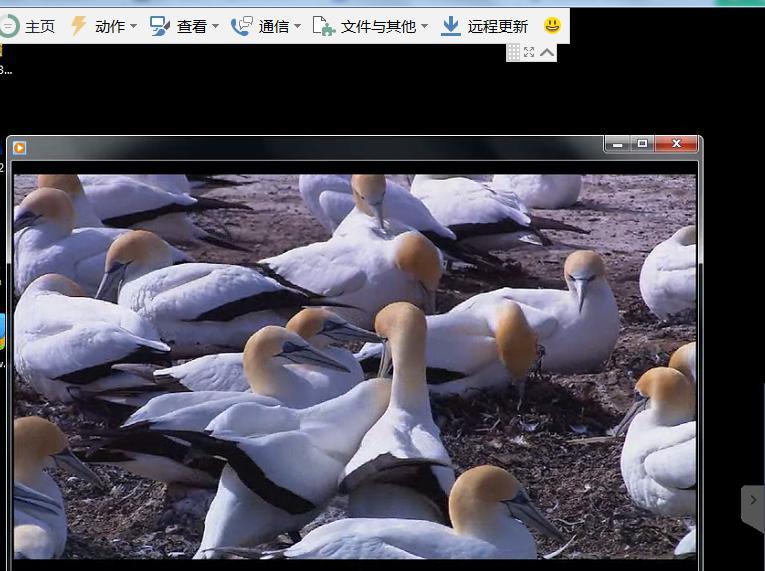 teamviewer观看远程计算机的视频