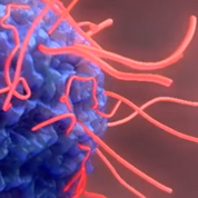 埃博拉病毒3D动画
